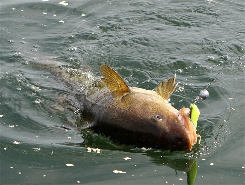 где сегодня ловят рыбу в калининграде