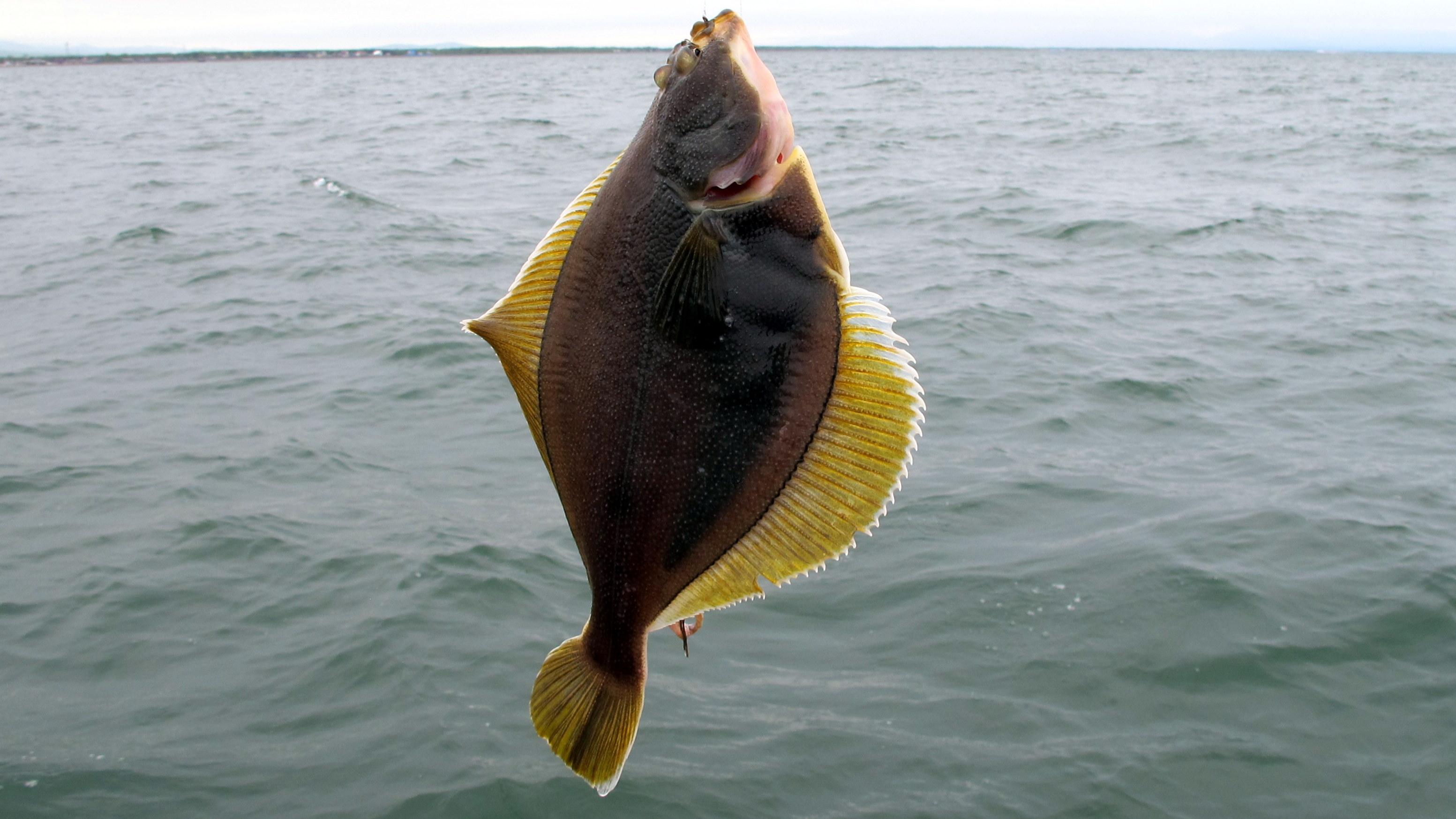 камбала черного моря рыбалка