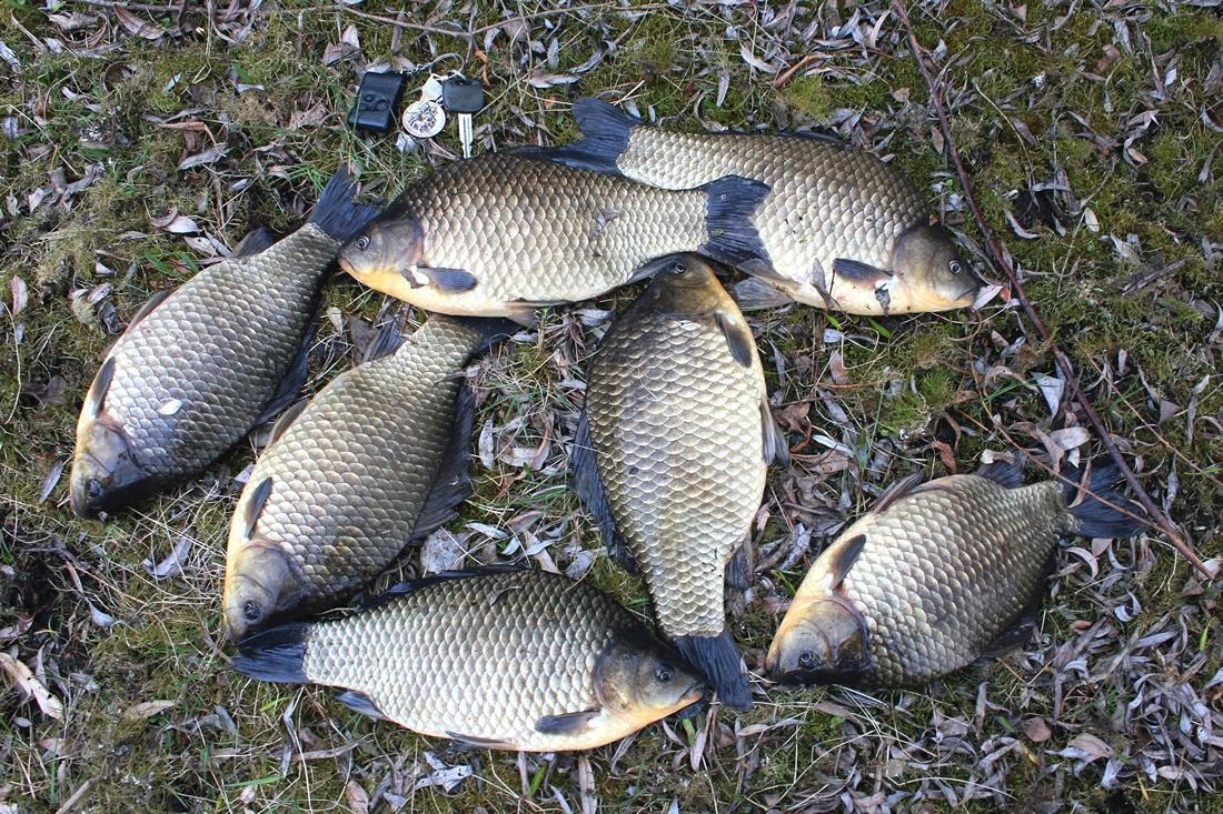 форум почти подольском рыбалка